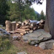 Holzernte eingebracht 3