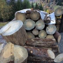 Holzernte vorbereitung